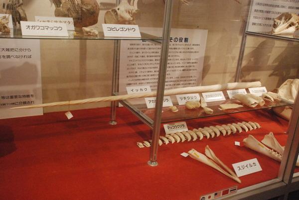 くじら博物館 (26)