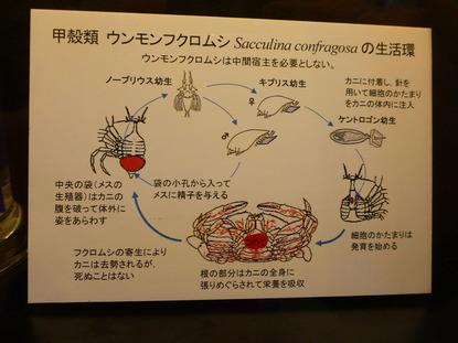 目黒寄生虫館 (8)