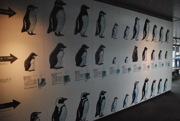 長崎ペンギン水族館 (15)