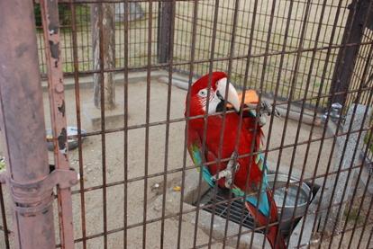 久留米鳥類センター (22)