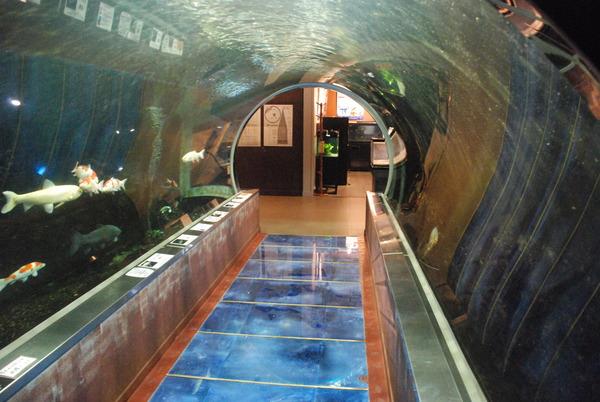 水産学習館 (13)