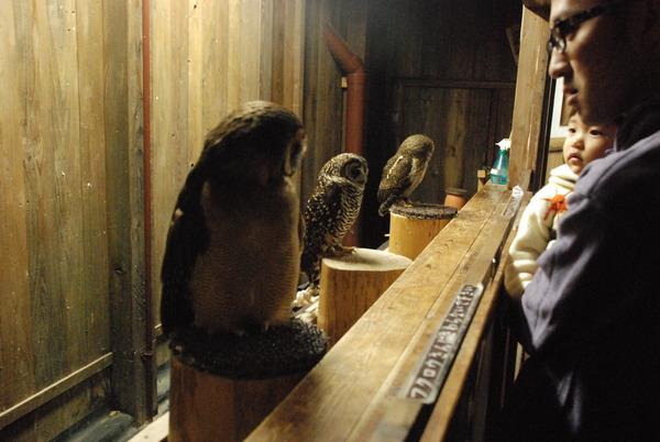 富士花鳥園 (31)
