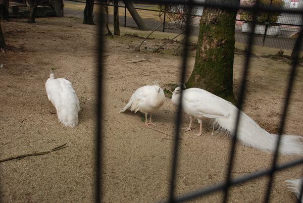 久留米鳥類センター (9)
