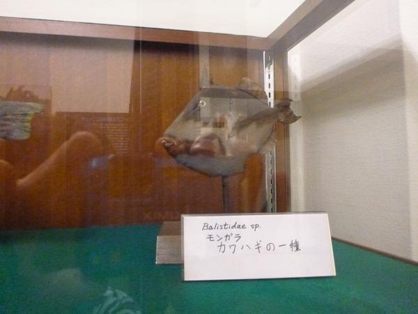 東京海洋大学 水産資料館 (29)