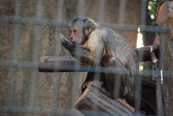 野毛山動物園 (21)