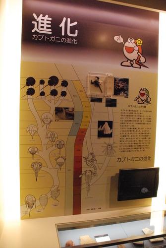 カブトガニ博物館 (25)