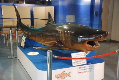 日本一の魚の剥製水族館 (2)