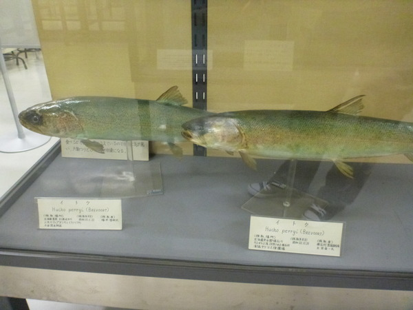 東京海洋大学 水産資料館 (79)