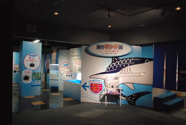 鹿児島水族館 (19)
