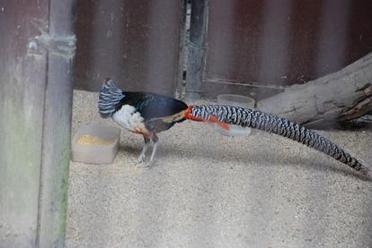 久留米鳥類センター (14)