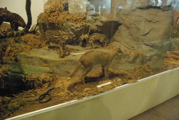 猫の博物館 (8)