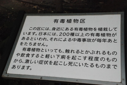 東京都薬用植物園 (16)