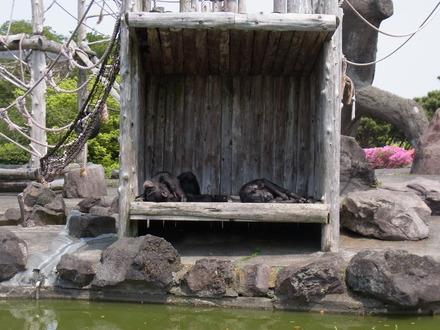 伊豆しゃぼてん公園 (78)
