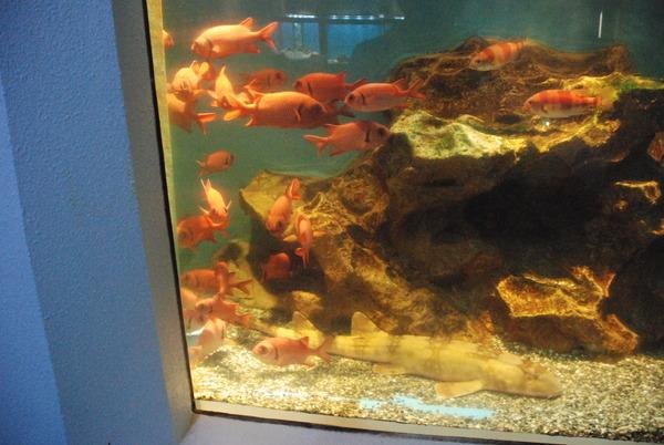桂浜水族館 (43)