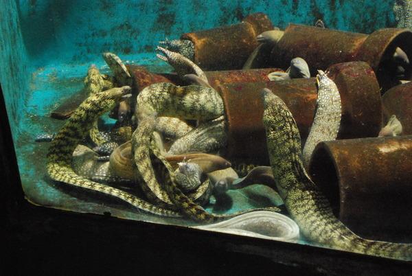 新屋島水族館 (43)