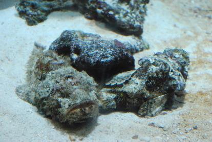 鹿児島水族館 (8)