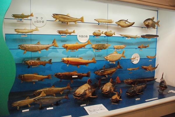 日本一の魚の剥製水族館 (24)