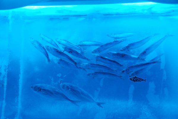 氷の水族館 (15)