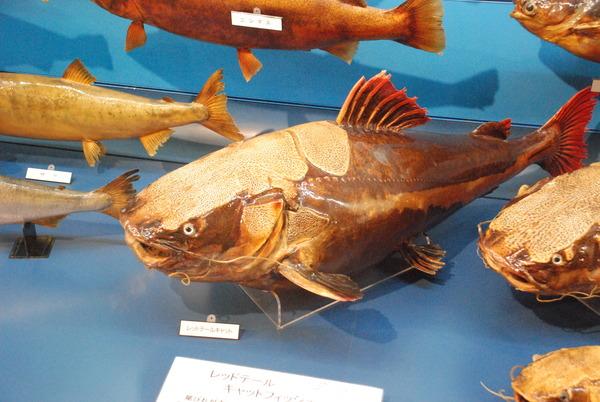 日本一の魚の剥製水族館 (27)