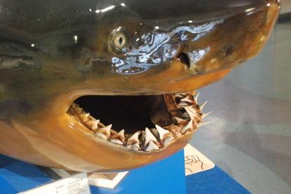 日本一の魚の剥製水族館 (3)