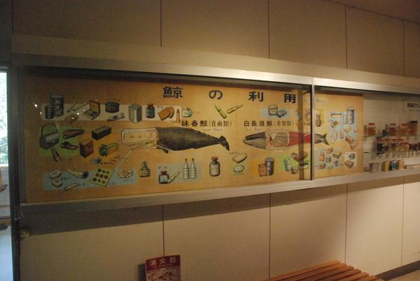くじら博物館 (38)