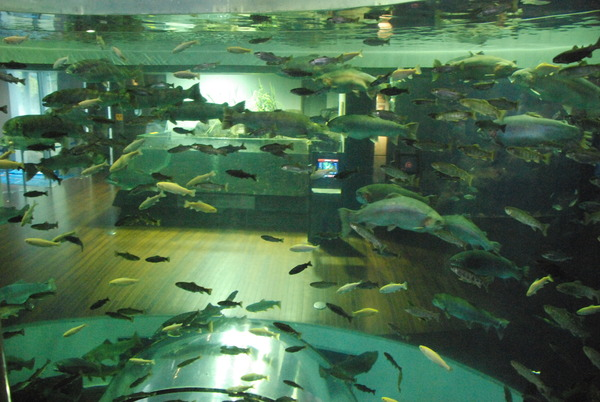 山梨県立富士湧水の里水族館 (29)