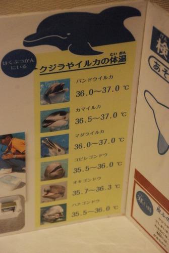 くじら博物館 (16)