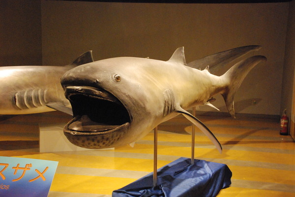 東海大海洋生物博物館 (37)