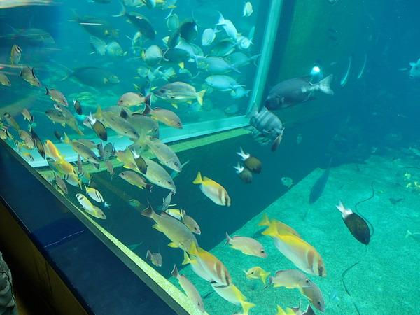 箱根園水族館 (107)