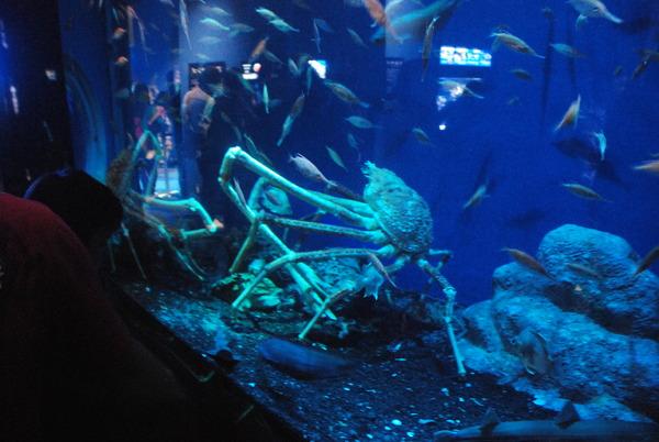 沼津港深海水族館 (43)