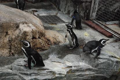 長崎ペンギン水族館 (21)