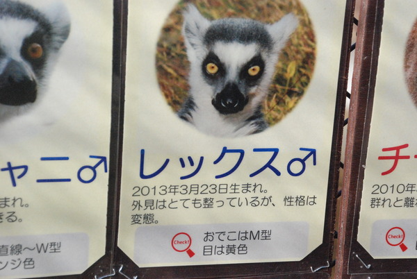 日本モンキーセンター (31)