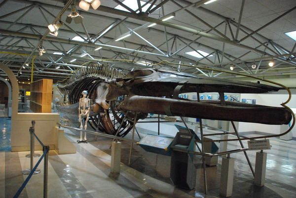 東海大海洋生物博物館 (14)