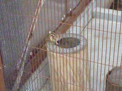 平塚市ふれあい動物園 (3)