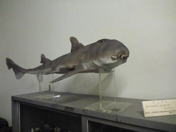 東京海洋大学 水産資料館 (33)
