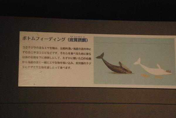 くじら博物館 (22)
