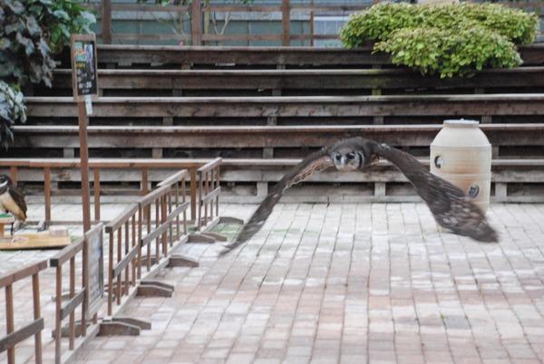 松江フォーゲルパーク (42)