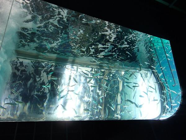 箱根園水族館 (109)