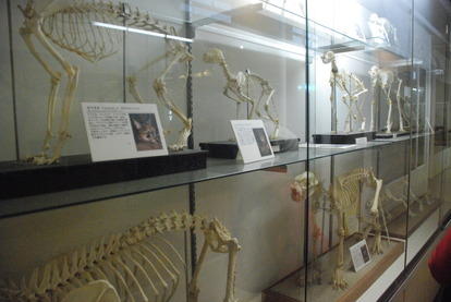 猫の博物館 (13)