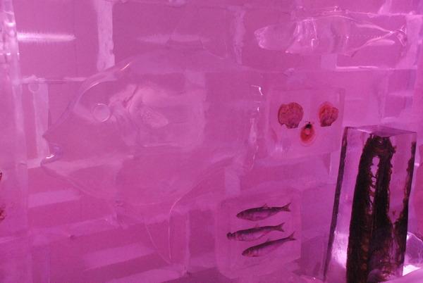 氷の水族館 (4)