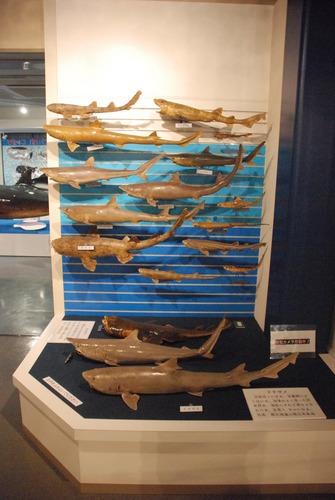 日本一の魚の剥製水族館 (11)