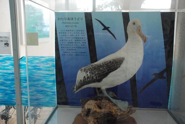 東海大海洋生物博物館 (1)