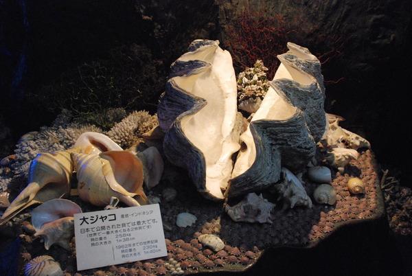 竹島ファンタジー館 (27)