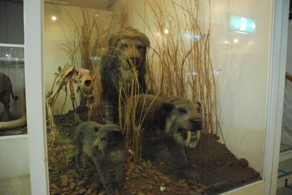 猫の博物館 (16)