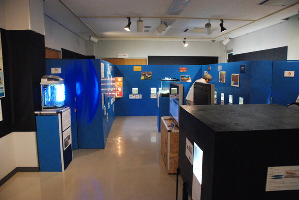 カブトガニ博物館 (14)