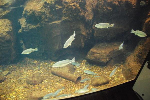 山梨県立富士湧水の里水族館 (14)