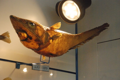 日本一の魚の剥製水族館 (22)