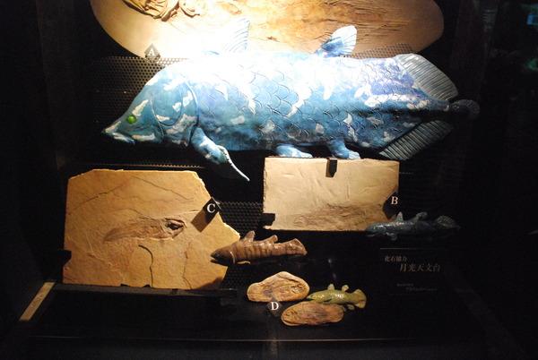沼津港深海水族館 (4)