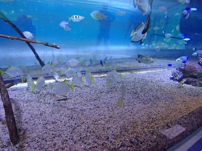 箱根園水族館 (104)