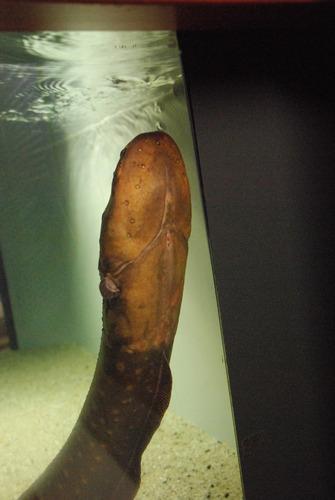 鹿児島水族館 (30)